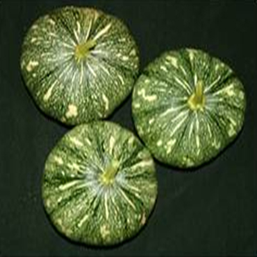Pumpkin seeds, a rich source of protein and amino acids